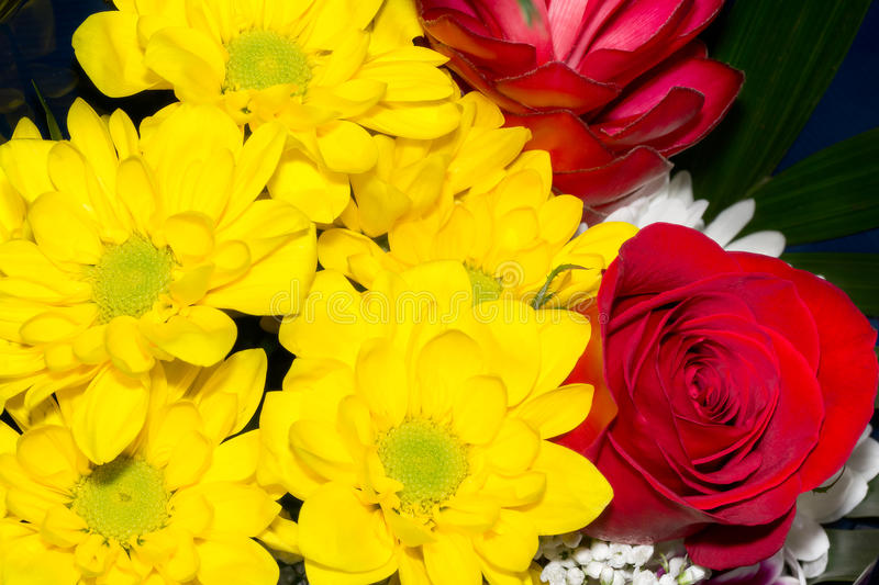 Bouquet of yellow marguerites and roses royalty free stock photos