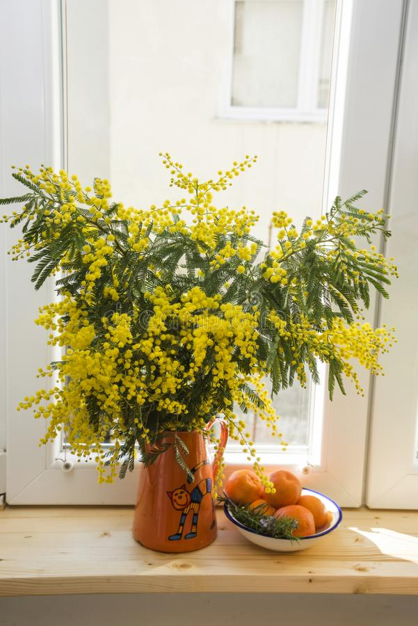 Bouquet of yellow Mimosa in an orange teapot on a wooden windowsill and a Mandarin saucer on a white window background close-up,. Against background of the stock photo