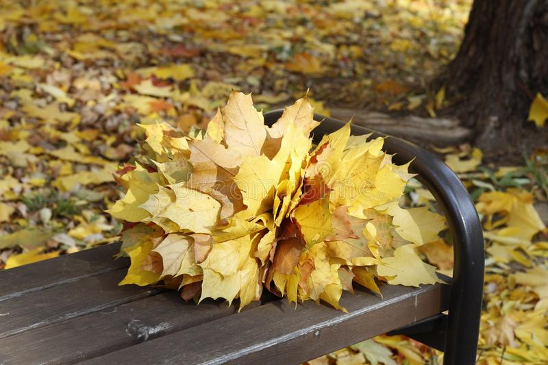 A bouquet of yellow, orange, red maple leaves lies on a bench in the forest stock images