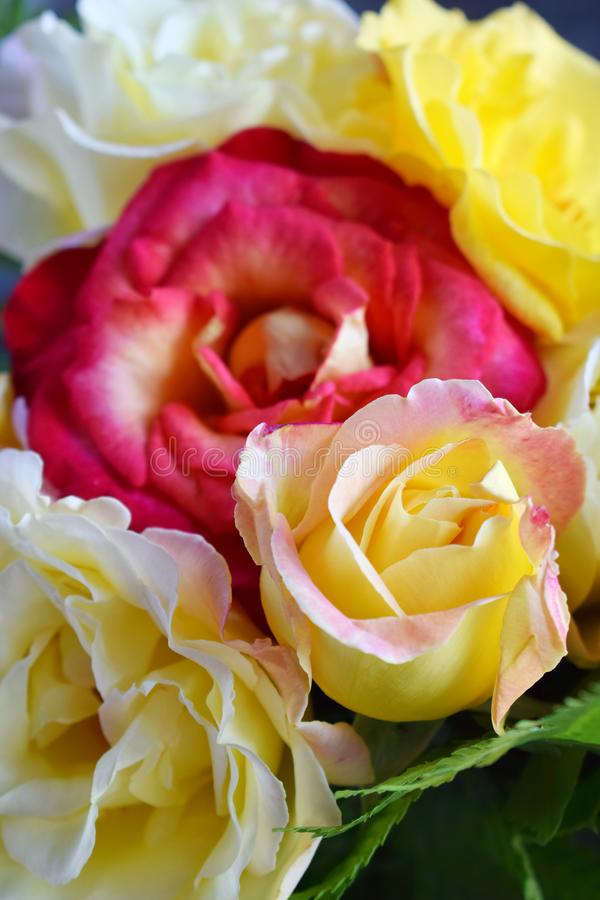 Bouquet of yellow and red roses. Flowers. Valentine or Wedding Theme. Romantic. Copy space.  stock image