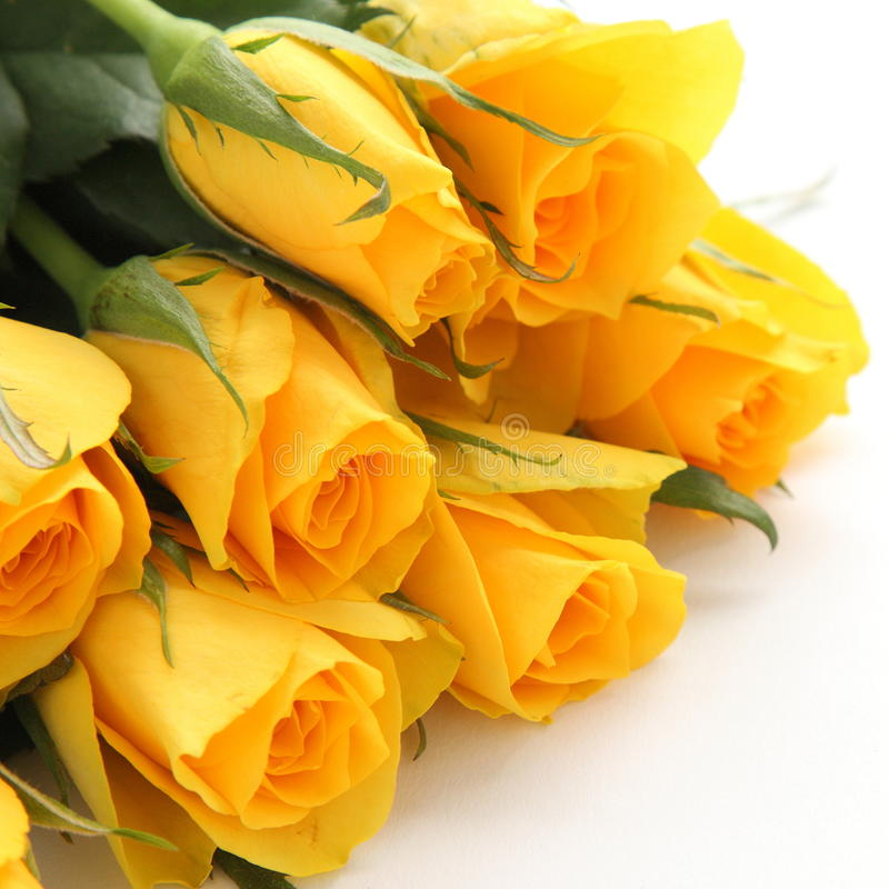 Bouquet Of Yellow Roses On White Background Stock Image - Image of ...