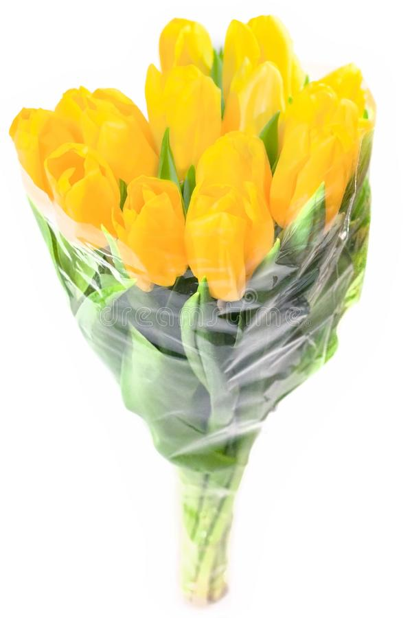 Bouquet of yellow tulips isolated on white background. Valentine`s day and mother`s Day background. International women stock image