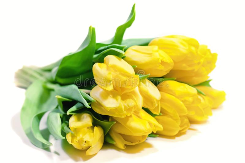 Bouquet of yellow tulips isolated on white background. Valentine`s day and mother`s Day background. International women royalty free stock photography
