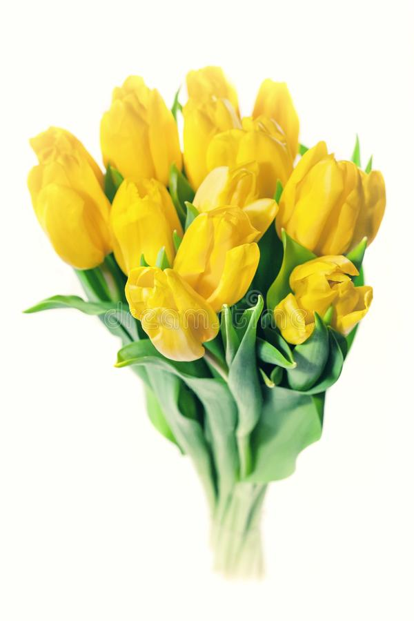 Bouquet of yellow tulips isolated on white background. Valentine`s day and mother`s Day background. International women stock photography