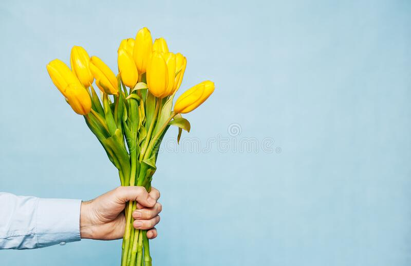 Bouquet of yellow tulips in a male hand on a blue background. Greeting card template with copy space. The concept of the holiday royalty free stock images