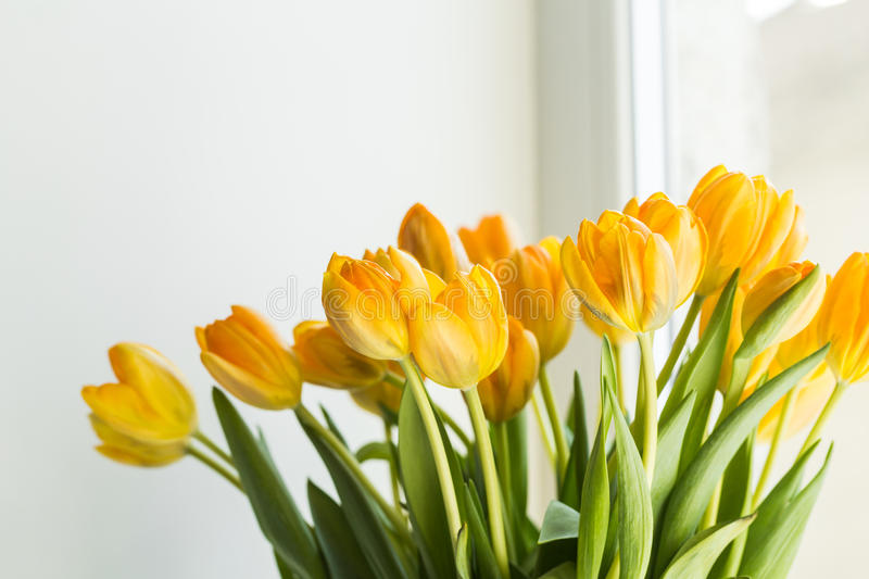 A bouquet of yellow tulips on window. A bouquet of yellow tulips on the window stock photography