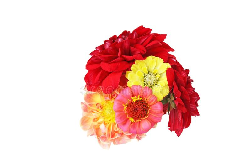 Bouquet of zinnia and dahlia in a white background stock photography