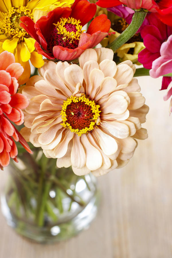 Bouquet Of Zinnia Flowers Stock Photo