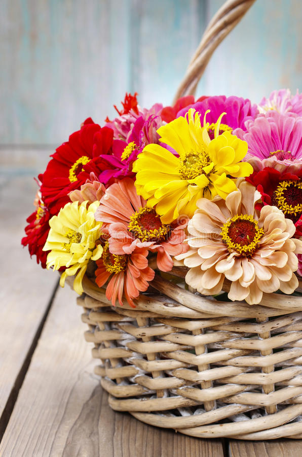 Download Bouquet Of Zinnia Flowers In Wicker Basket. Stock Image - Image: 43775371