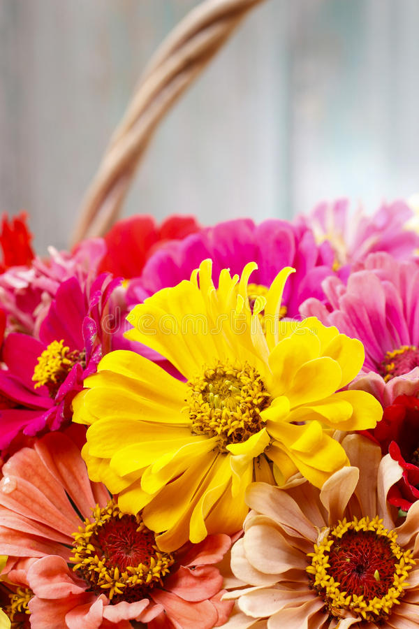 Download Bouquet Of Zinnia Flowers In Wicker Basket. Stock Image - Image of blooming, lovely: 43775669