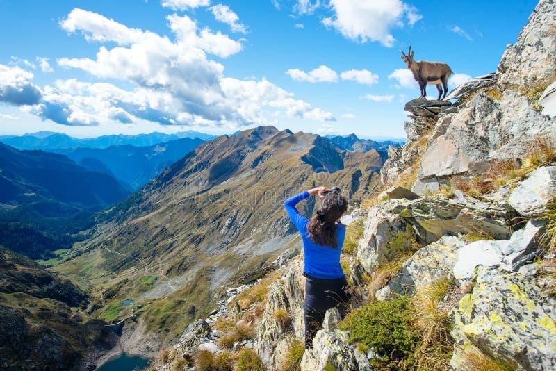 Bouquetin de photographe de randonneur de fille dans les montagnes photographie stock libre de droits