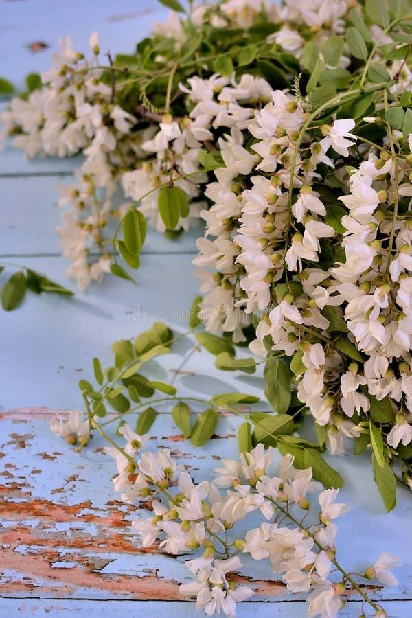 Bouquets de fleur d'acacia sur un contexte bleu images stock