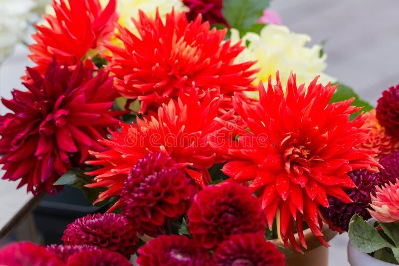 Bouquets des dahlias rouges sur un marché en plein air vente de fleurs images stock