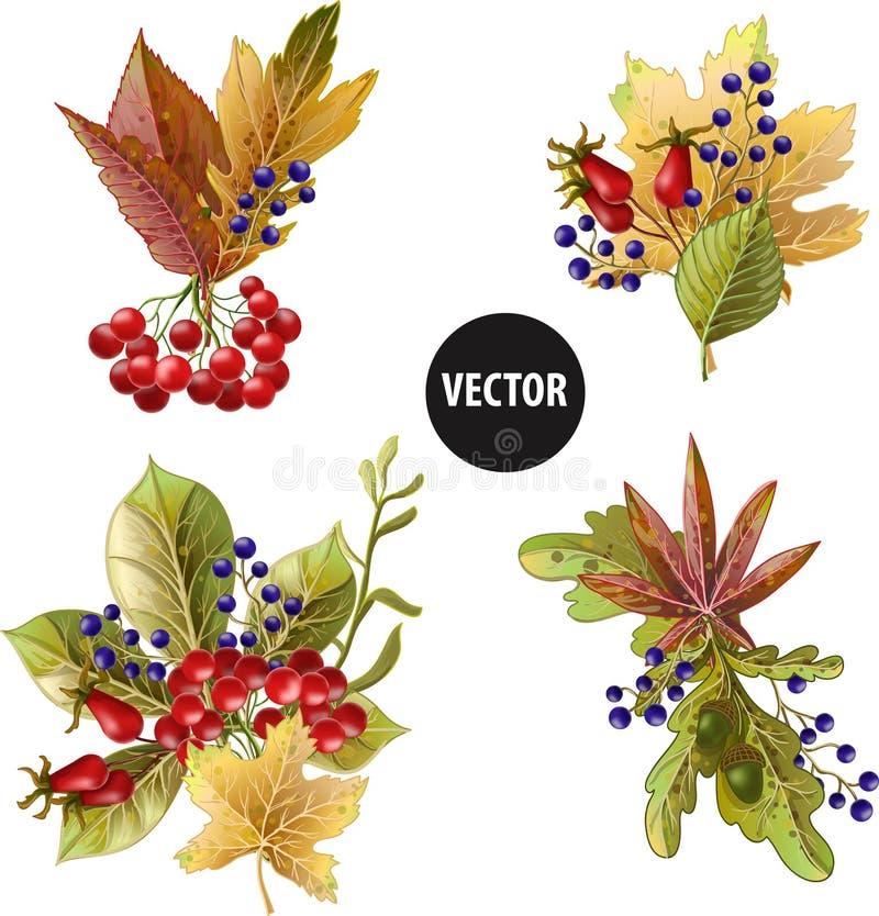 Bouquets des feuilles et des baies de jaune d'automne Illustration de vecteur illustration de vecteur