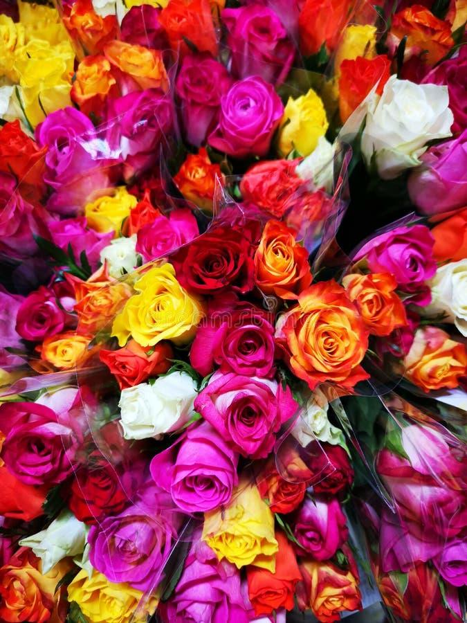 Bouquets des roses colorées dans la cellophane photo stock