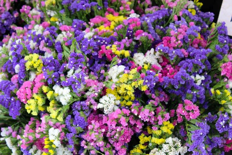 Bouquets du limonium de statice, différentes couleurs images libres de droits