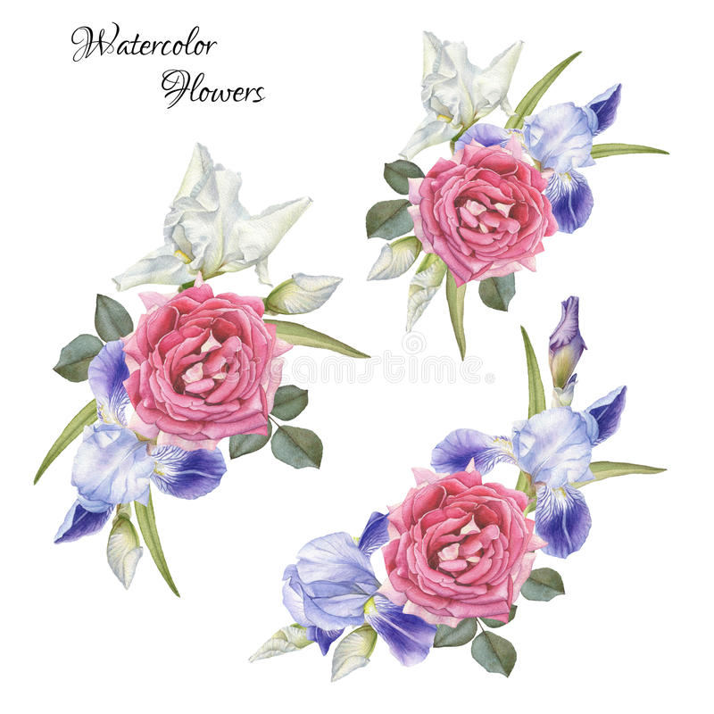 Bouquets of flowers. Irises and roses. Bouquet of flowers. Flowers set of watercolor roses and irises royalty free illustration