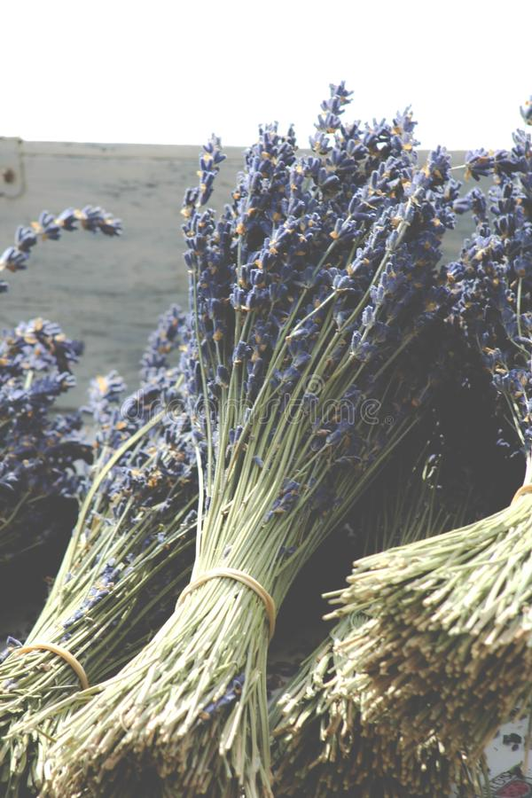 Bouquets of fragrant dried lavender stock photos