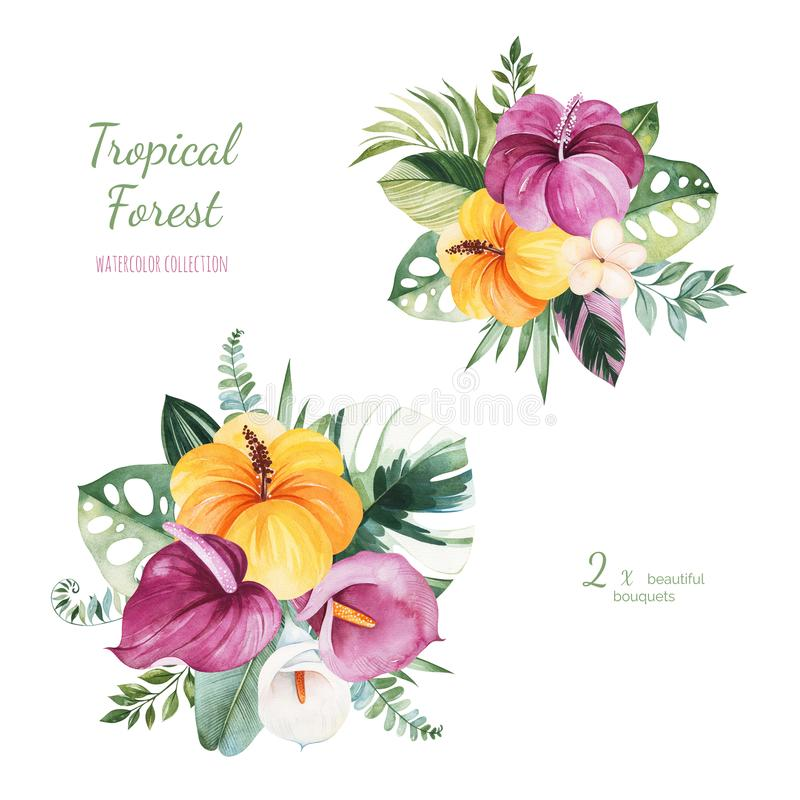Caribbean Wedding Flowers: Caribbean Flower Lily Stock Illustrations