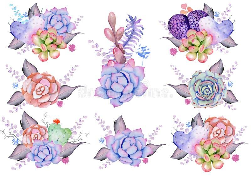 Bouquets succulents illustration de vecteur