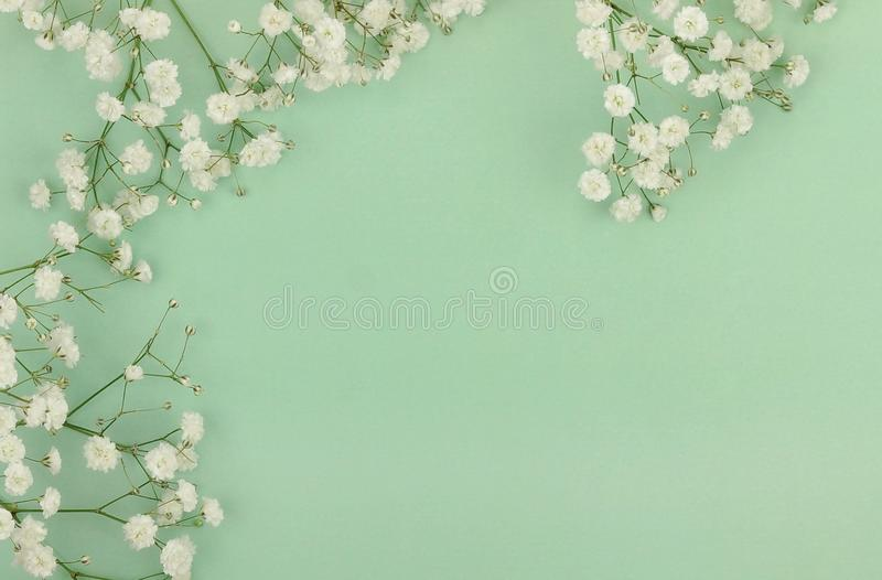 Bouquets of a white gypsophila flower on a pale green background. Top view. copy space. Holiday concept stock images