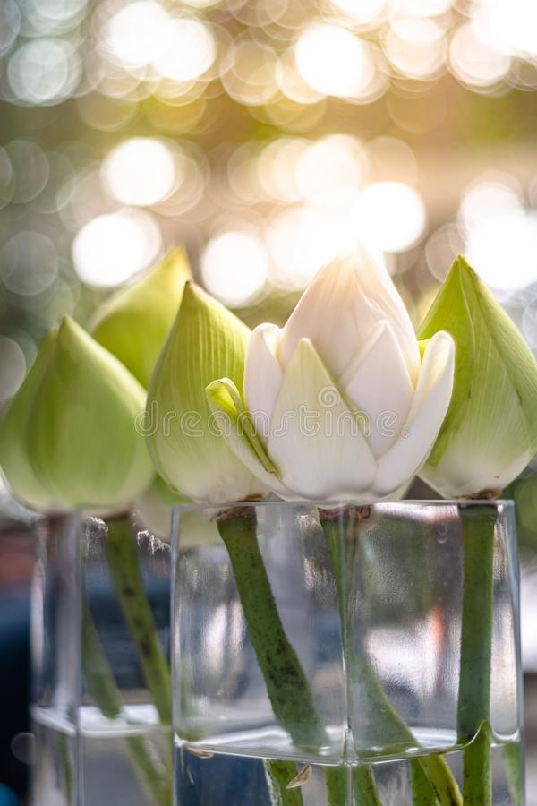 Bouquets of white lotus flowers in  jar with light bokeh background royalty free stock images
