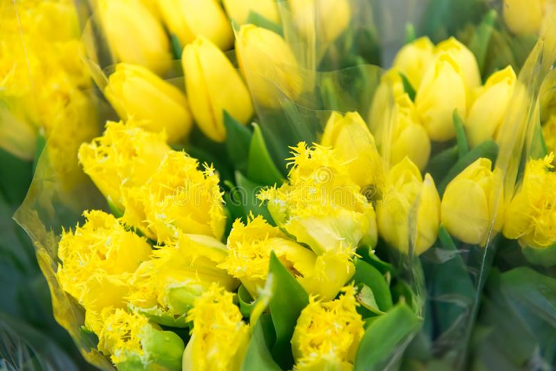 Bouquets of yellow tulips, close up, selective focus. Gardening and Floriculture, Floristy theme royalty free stock image