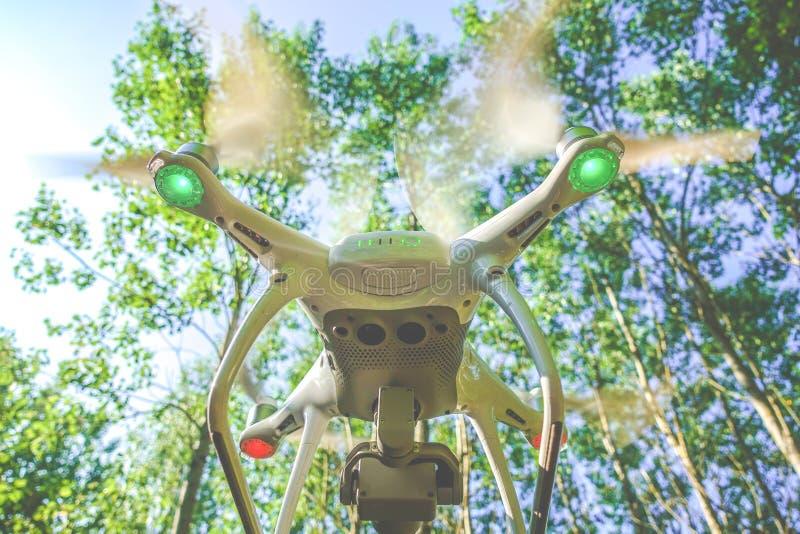 Bourdon dans la forêt photo libre de droits
