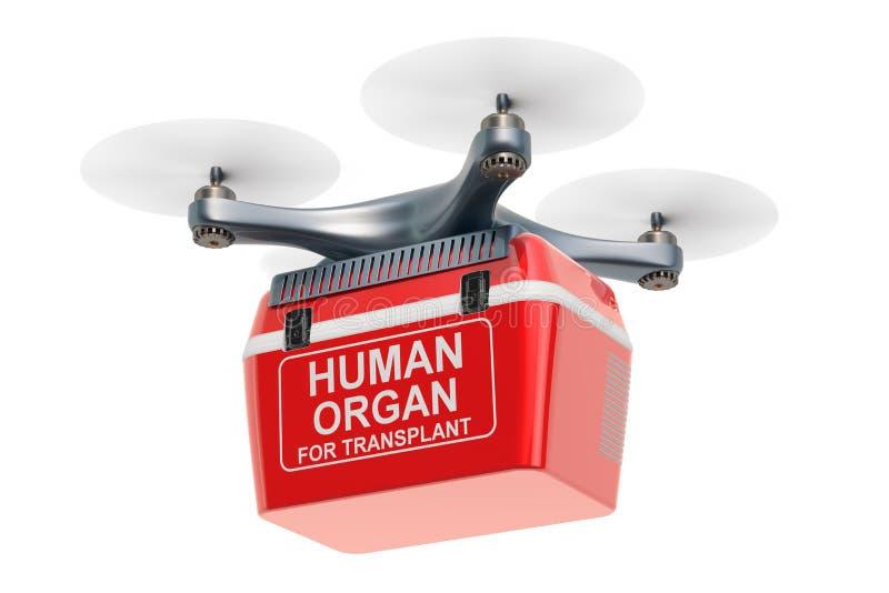 Bourdon de la livraison avec le réfrigérateur portatif pour transporter les organes de distributeur, 3D illustration libre de droits