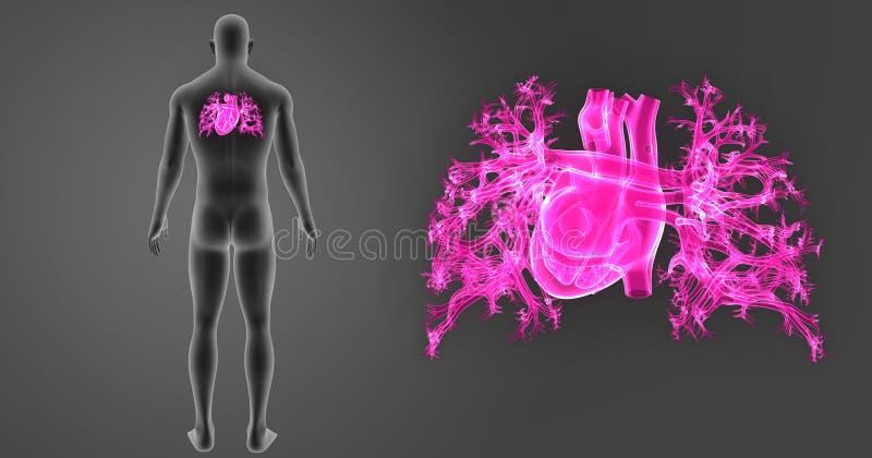 Bourdonnement humain de coeur avec la vue de postérieur de corps illustration libre de droits