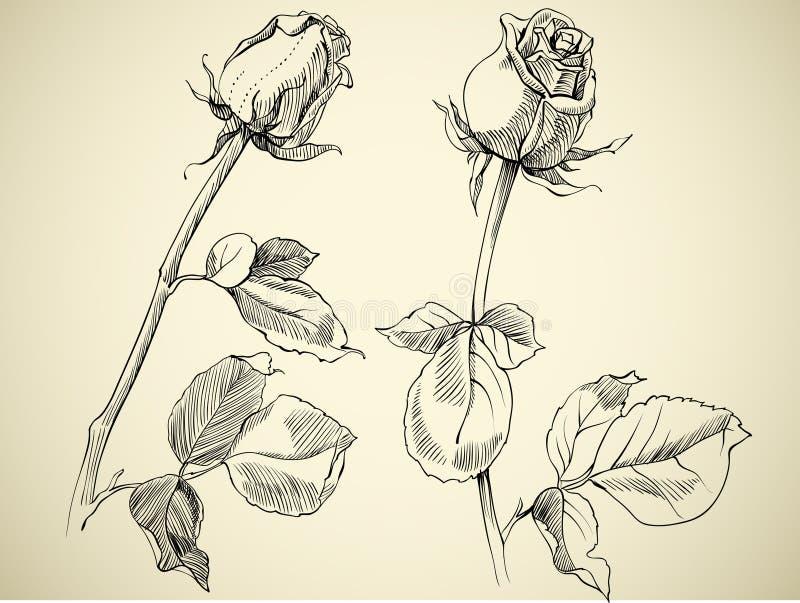 Bourgeon de rose illustration de vecteur illustration du - Dessin bourgeon ...