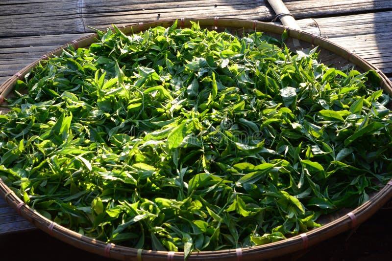 Bourgeon et feuilles de thé sur le panier en bambou photo libre de droits