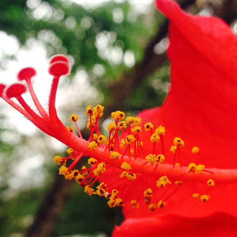 Bourgeon floral images libres de droits