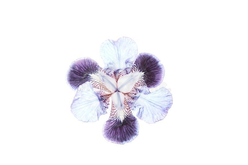 Bourgeon floral color? multi photo libre de droits