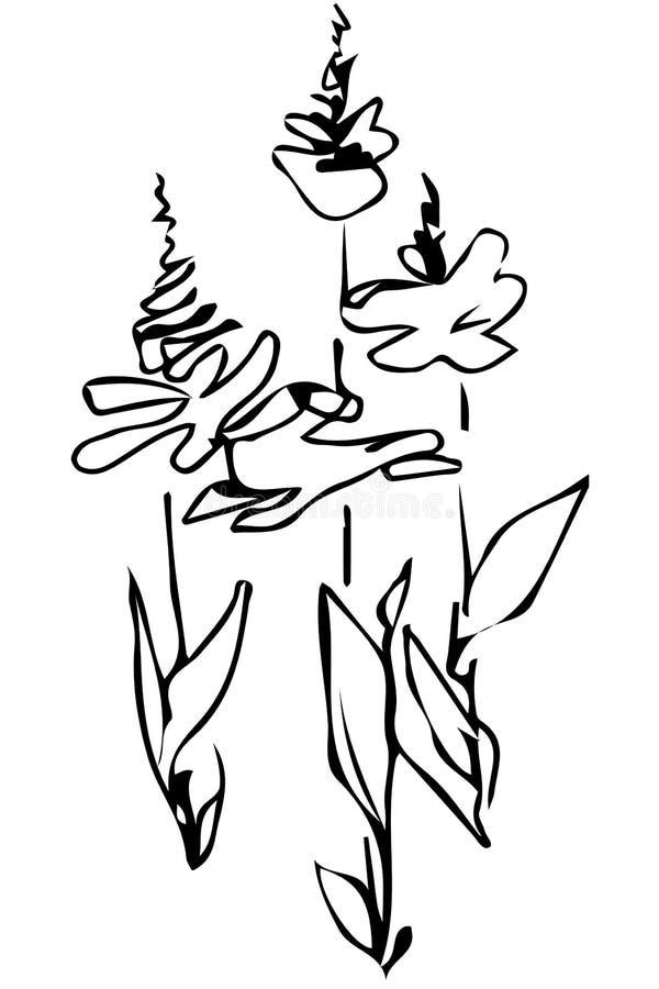 Bourgeon floral de croquis de vecteur sur la tige illustration de vecteur