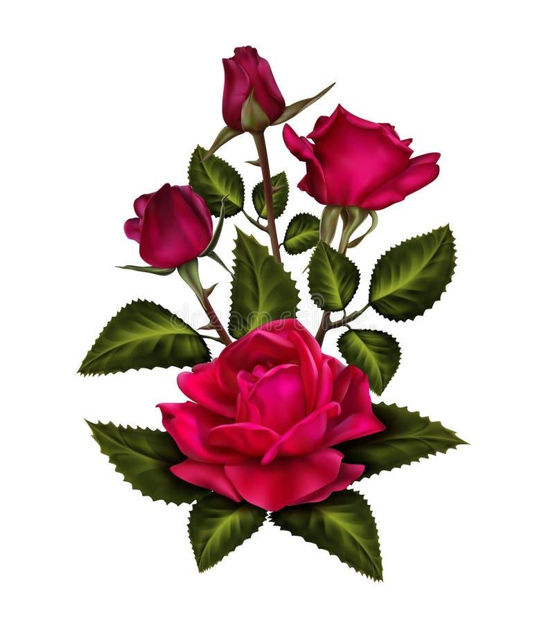Bourgeon floral rose de velours rose rouge avec les feuilles vertes illustration stock
