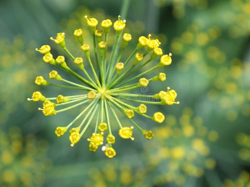 Bourgeon Floraux Jaunes Domaine Public Gratuitement Cc0 Image