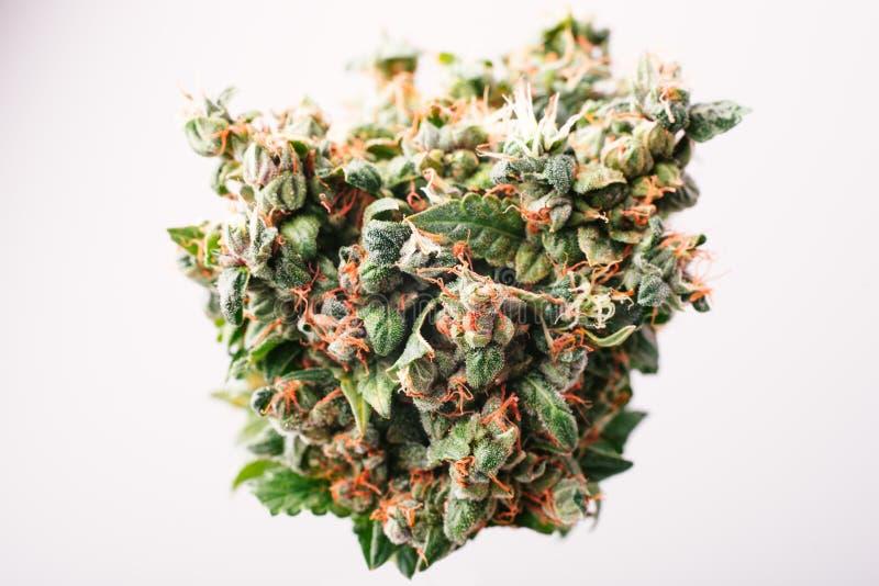 Bourgeon médical de cannabis photographie stock libre de droits