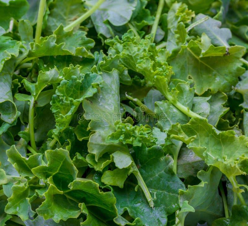 Bourgeons de chou de chou frisé Salade photos libres de droits