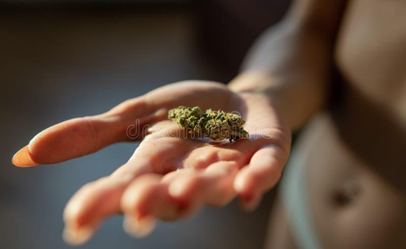 Bourgeons et trichomes CBD THC de cannabis photographie stock libre de droits