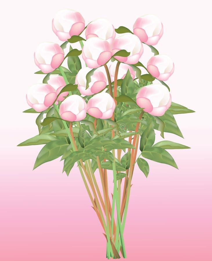 Bourgeons roses frais de pivoines sur la tige illustration libre de droits