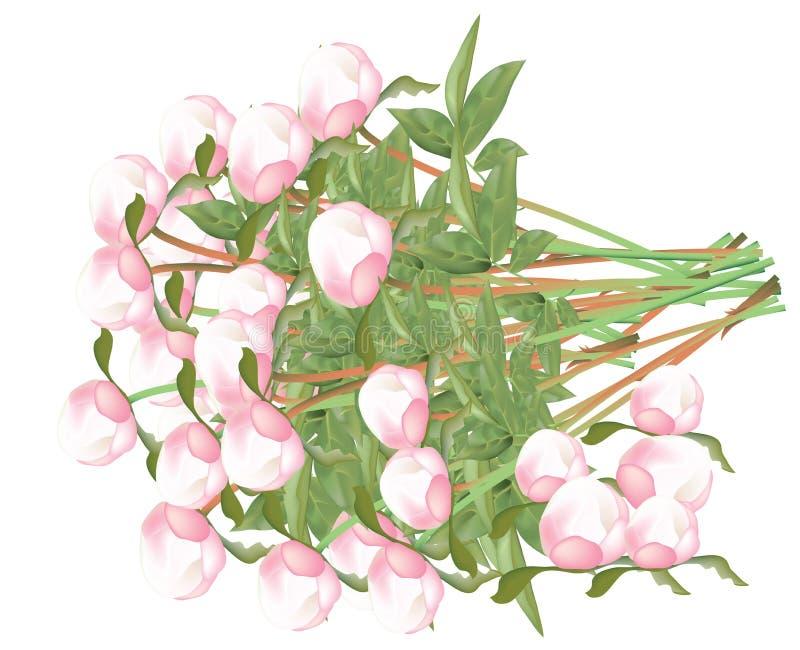 Bourgeons roses frais de pivoines sur la tige illustration de vecteur