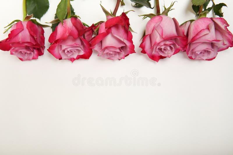 Bourgeons roses rouges sur le fond blanc sur le dessus avec l'espace de copie images stock