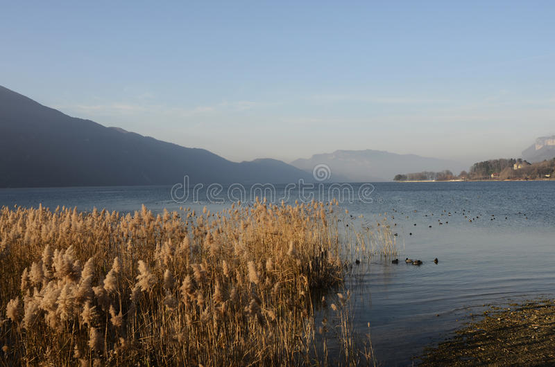 Bourget lake and mountains. Tranquil water of Bourget lake, mountains of Chat and reeds bed stock photography