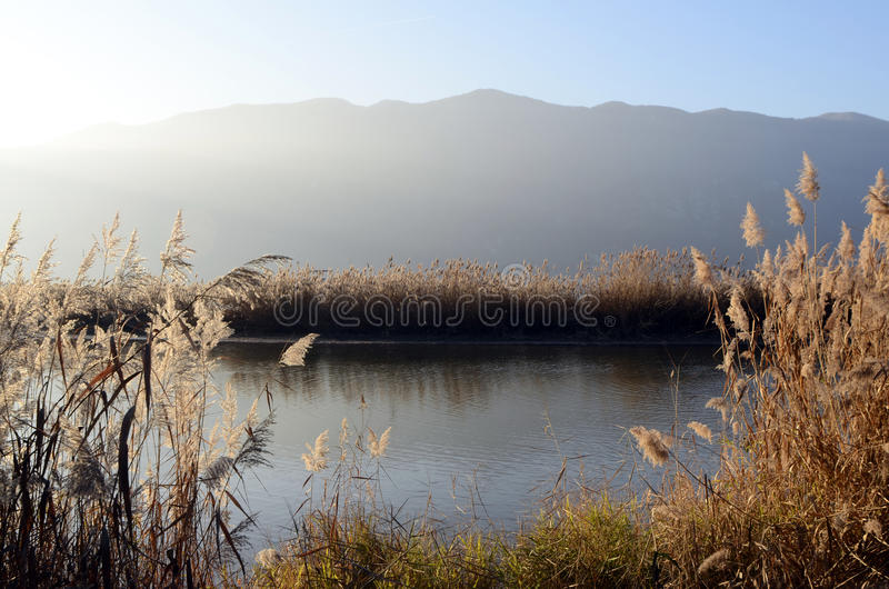 Bourget lake and mountains. Tranquil water of Bourget lake, mountains of Chat and reeds bed stock photos