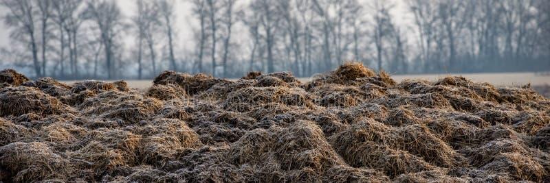 Bouse de vache congelée dans le domaine Drapeau de Web images stock
