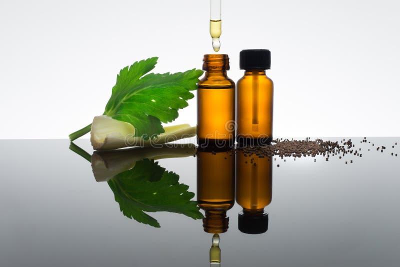 Bouteille d'huile essentielle avec des graines de céleri photographie stock libre de droits