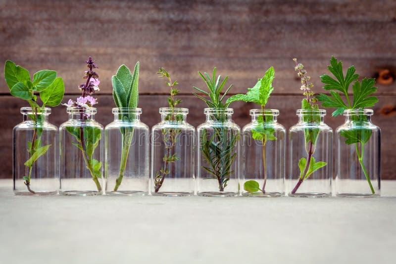 Bouteille d'huile essentielle avec la fleur sainte de basilic d'herbes, écoulement de basilic photographie stock libre de droits