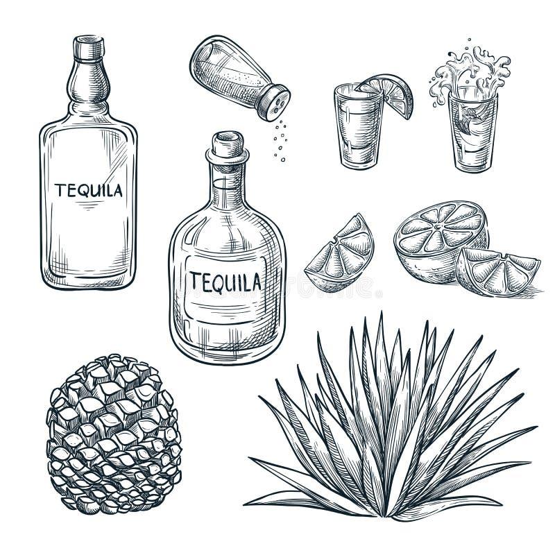 Bouteille de tequila, verre à liqueur et ingrédients, croquis de vecteur Boissons mexicaines d'alcool Usine et racine d'agave illustration stock