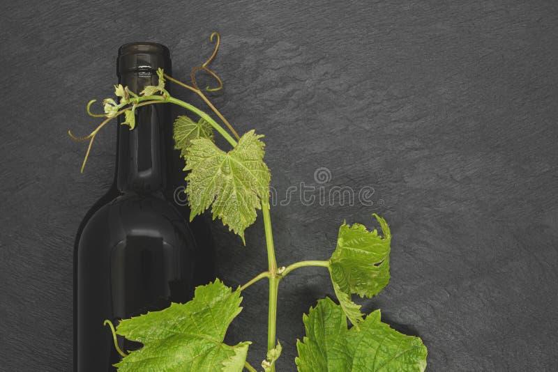 Bouteille de vin et jeune brindille de raisin photos stock